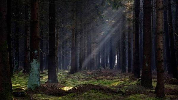 Tajemný les u Českých Budějovic - Bor