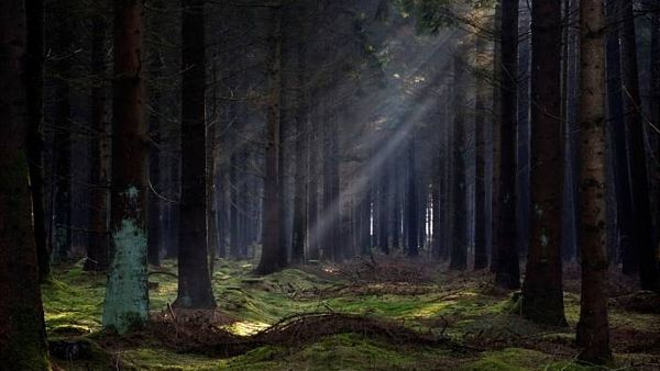 Temný les~ Brani%C5%A1ovsk%C3%BD_les