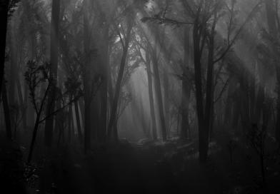 Strašidelný příběh: Pláč dívky uprostřed lesa